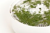 Dried dill. Food Dehydrator