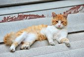 picture of asbestos  - Red cat on the roof asbestos - JPG