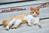 image of asbestos  - Red cat on the roof asbestos - JPG