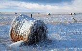 Snow On Bale Of Hay And Blue Sky poster