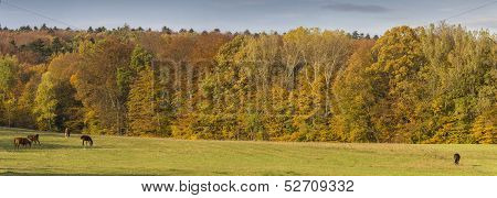 Autumn Landscape Panorama With Horses
