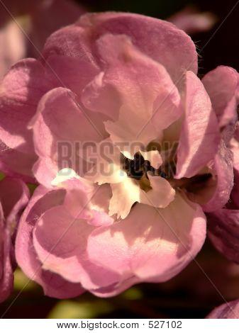 Delphinium Closeup