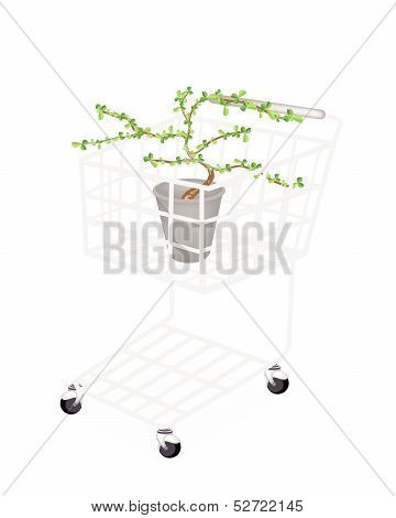 Bonsai Tree And Plant In A Shopping Cart