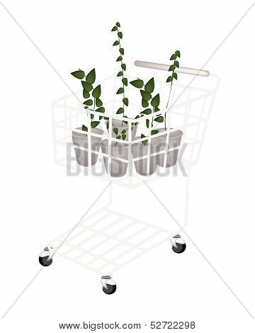 A Set Of Creeper Plant In A Shopping Cart