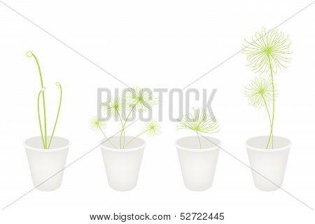 Concepts, Decoration, Symbol,  Plants In A Flower Pot