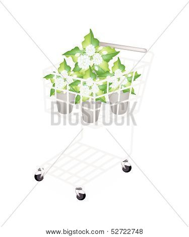 Illustration Of Jasmine Flowers In A Shopping Cart