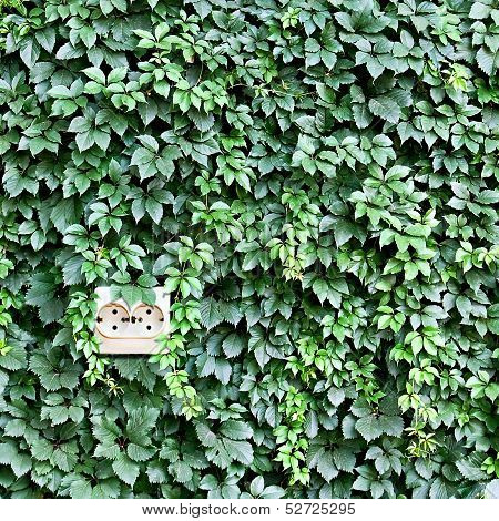 Power Outlet Built Into The Background Of Leaves