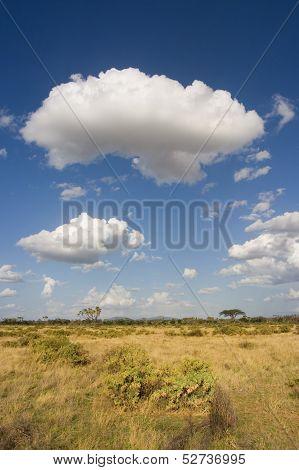 Samburu Landscape