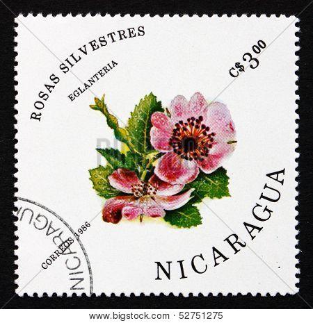 Postage Stamp Nicaragua 1986 Sweet Briar, Rosa Eglanteria, Flower