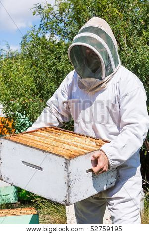 Young male beekeeper in protective workwear carrying honeycomb box at apiary
