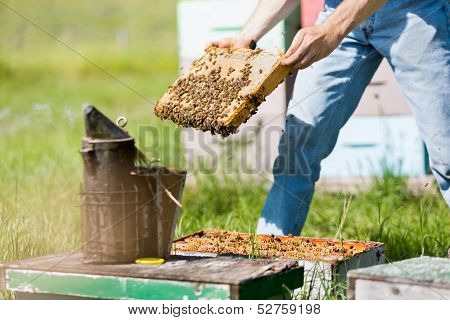 Midsection of male apiarist smoking a beehive on apiary