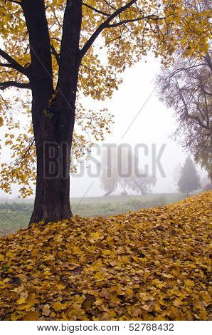 Beautiful Autumn Landscape With Leaves And Morning Fog