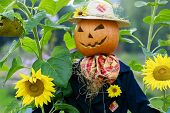 pic of scarecrow  - Scarecrow in the garden  - JPG