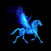 stock photo of winged-horse  - Blue fire Pegasus in motion on black background - JPG