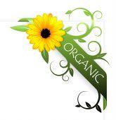 Постер, плакат: Лента для органических продуктов