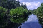 pic of orangutan  - Lush green rainforest along the river near Orangutan National Park - JPG