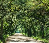 picture of marshlands  - Trees tunnel  - JPG