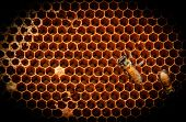 stock photo of larva  - Wild bee larvae are scaling the honeycomb in nature - JPG