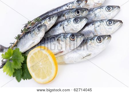 Fresh raw sardines on white background