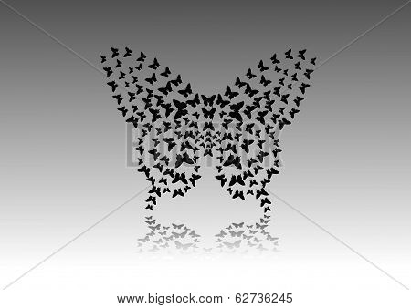 interesting design of black butterflies in butterfly