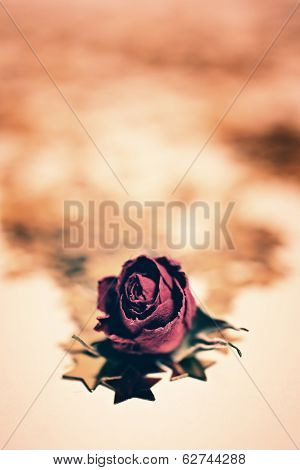 dry rose flower with golden stars