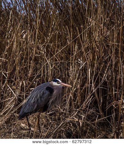 Angry Bird.