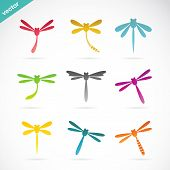 stock photo of dragonflies  - Vector group of colorful dragonfly on white background - JPG