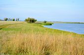 image of snipe  - Summer in steppe and on lake sprouts many colour - JPG