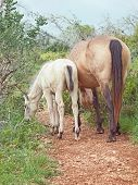 pic of mare foal  - mare with her foal - JPG
