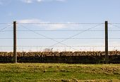Barbed Wire Fence Trenches Of Death Flanders Dixmude Great World War