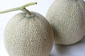 pic of muskmelon  - two fresh whole muskmelon on white background