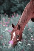 foto of horse-breeding  - Beautiful horse of Don breed in the summer pasture - JPG