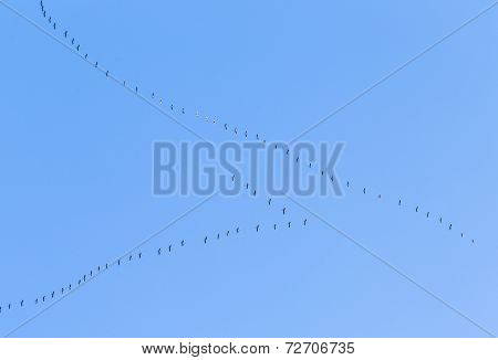 Migrant Birds On Their Way To Warmer Aerea