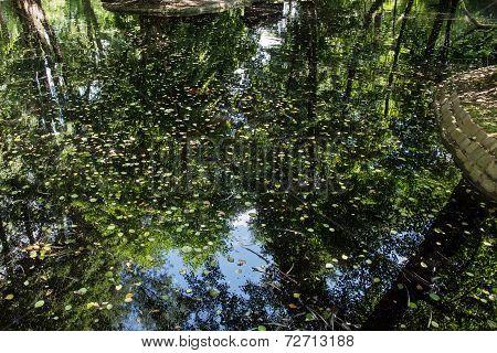 Fallen Leaves In A Dark Lake