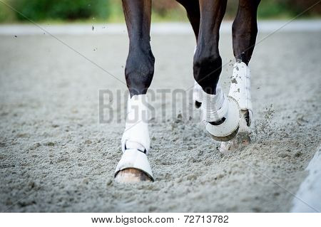 Closeup of the hooves from a horse