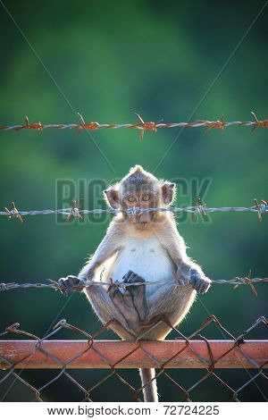 little monkey clombing on steel fence