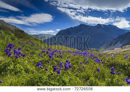Beautiful Mountain Landscape With Flowers And Blue Sky