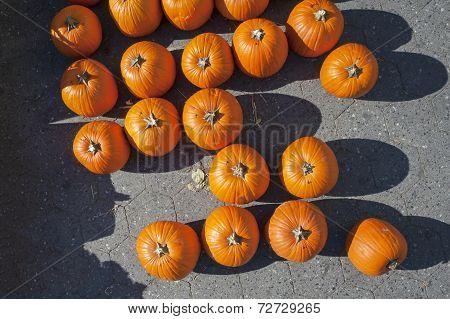Pumpkin Stalks