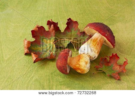 Ceps And Maple Leaves Scattered On The  Green Background