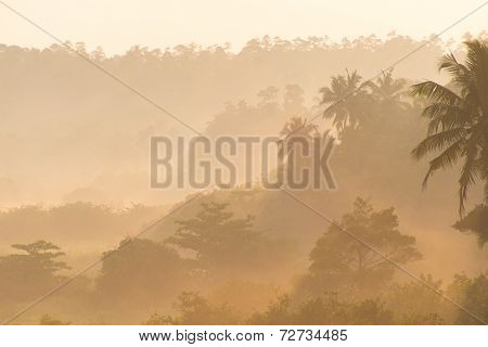 Sunrise Above Tropical Palm Jungle With Sun Rays Ang Thick Morning Fog