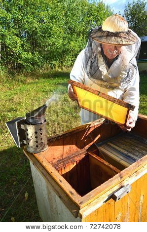 Experienced senior beekeeper making inspection in apiary after summer season