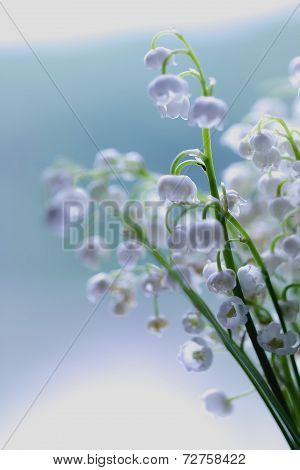 Lily Of The Valley Dream