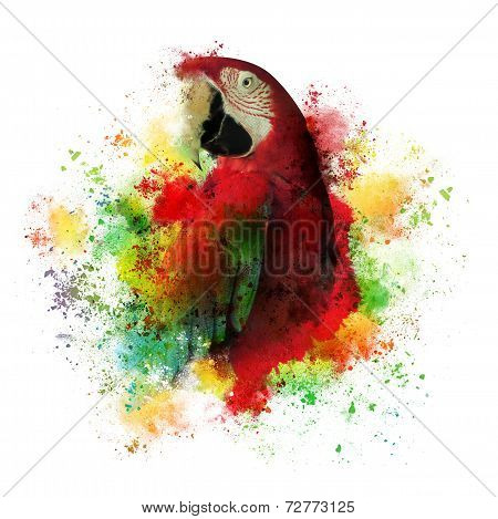 Paint Splatters Of Maccaw Parrot On White