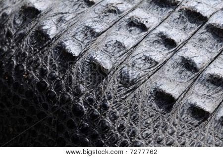 Gator Skin Texture
