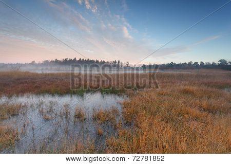 Autumn Morning On Swamp