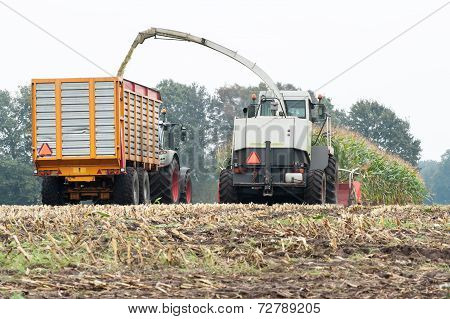 Harvester Cuts A Field Of Maize