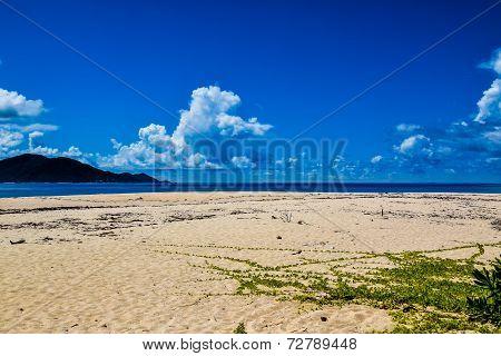 Sand, creeper and sea.