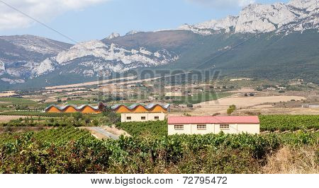 Alavesa Vineyards, La Rioja, Spain