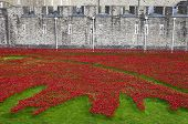 stock photo of beefeater  - The ceramic Poppies of the  - JPG