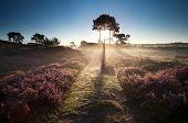 stock photo of ling  - illuminated countryside path at sunrise and heather - JPG